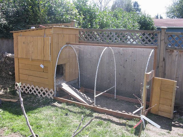 Chicken coop pvc the chickens things pinterest for Chicken coop made from pvc