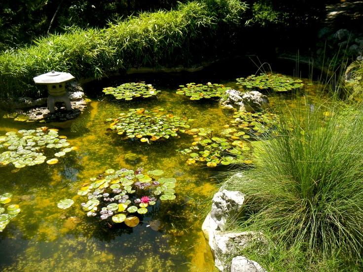 Botanical garden Austin TX WhereIveBeen Pinterest