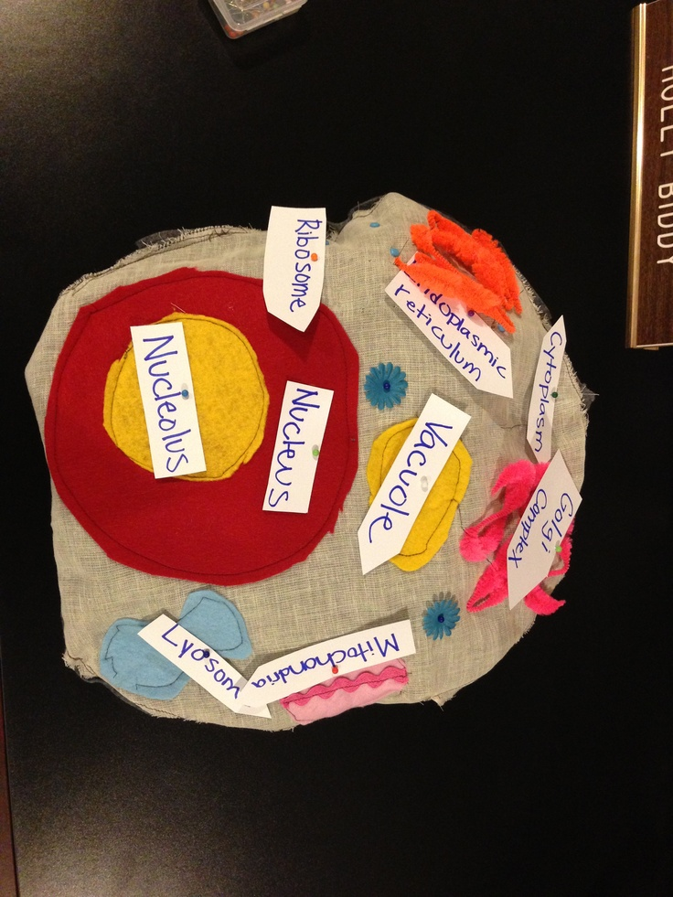 Animal Cells Projects For Middle Schools Middle School Science Projects With Animals