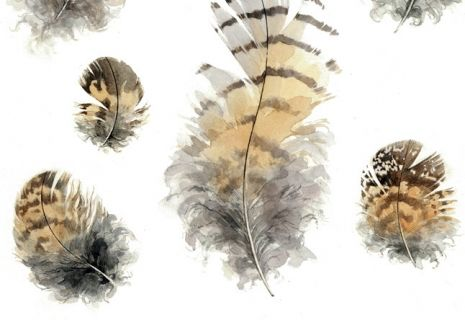 Great Horned Owl Feathers illustration   david scheirer watercolorGreat Horned Owl Illustration