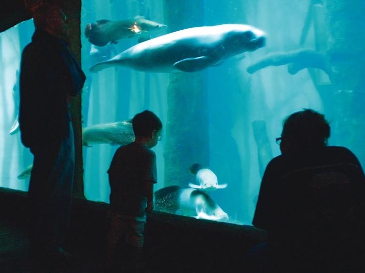 Aquario de Sao Paulo - Bing Imagens Sao Paulo, Brasil Pinterest