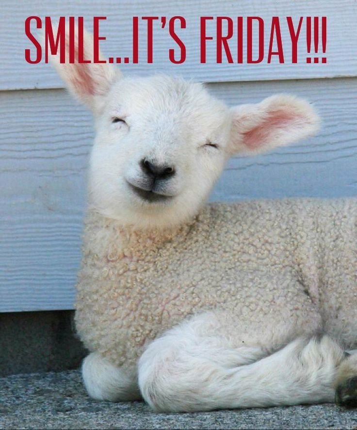 Image result for friday smiles