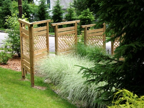Privacy fence grasses dreams pinterest for Privacy grass