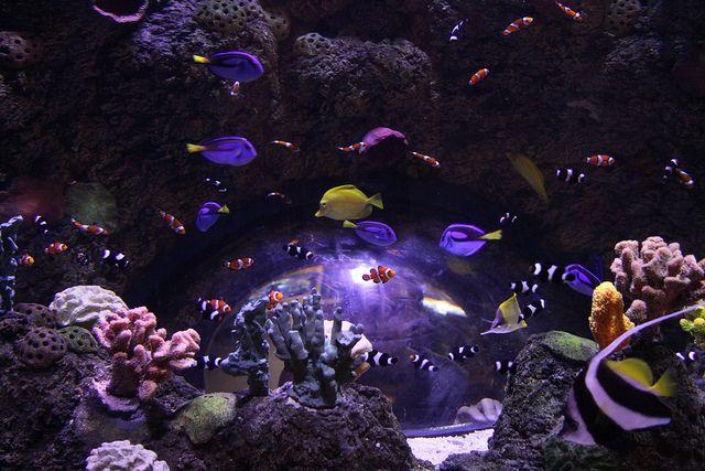 Legoland California Sea Life Aquarium Sea Life