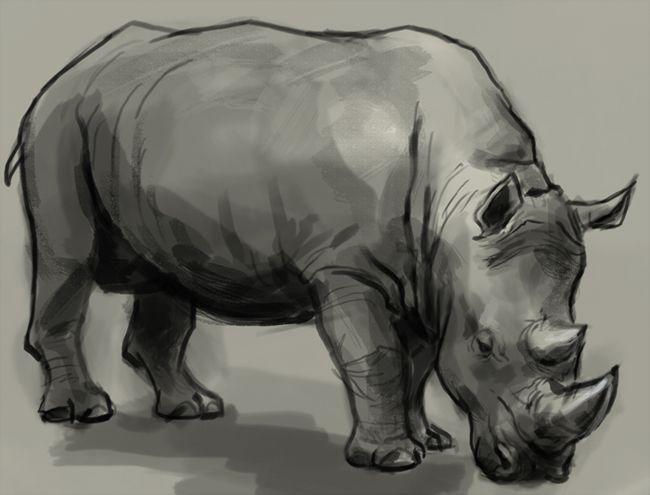 rhino-drawing.jpg (650×495) | Illustrations | Pinterest