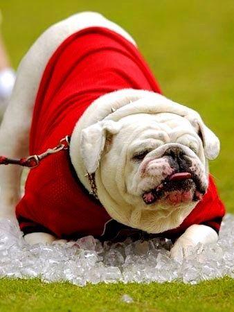 25+ best ideas about georgia bulldog room on pinterest