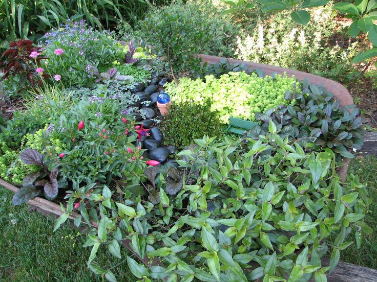 Pin by kathleen lorden on container garden ideas pinterest for Fairy garden box ideas