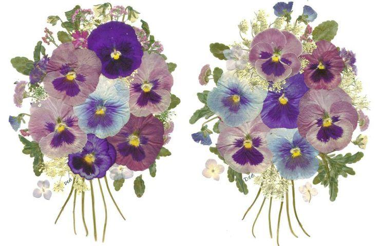 Pressed flowers | pressed flowers | Pinterest