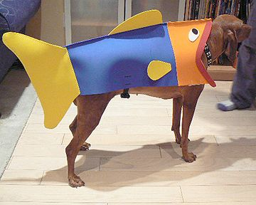 make a fish costume for a dog crafts art inspiration