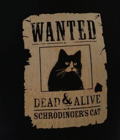 Schrodinger's Cat. | Mystique | Pinterest