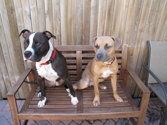 What's in a name?  the word #Pitbull evokes a lot of response... what does that word, pitbull, even mean?