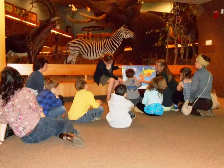 Third grade students learn about the relationships between plant and animal life in the African savanna during a recent visit to the Springfield Science Museum.