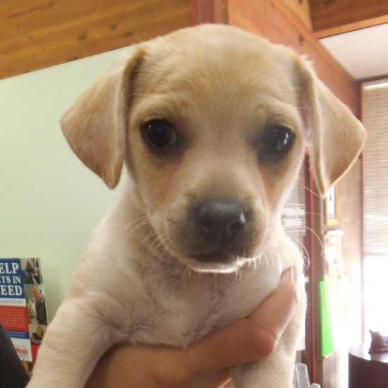 Dog Adoption San Diefo
