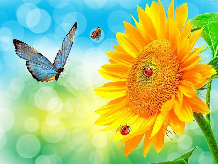 Butterfly, sunflower and ladybugs | Butterflies | Pinterest