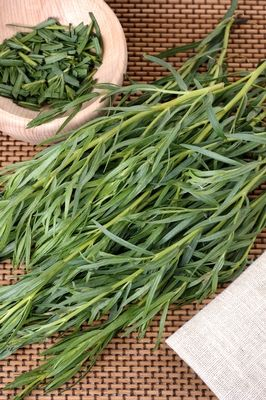 Little known fact: Tarragon helps repel some garden pests and can ...