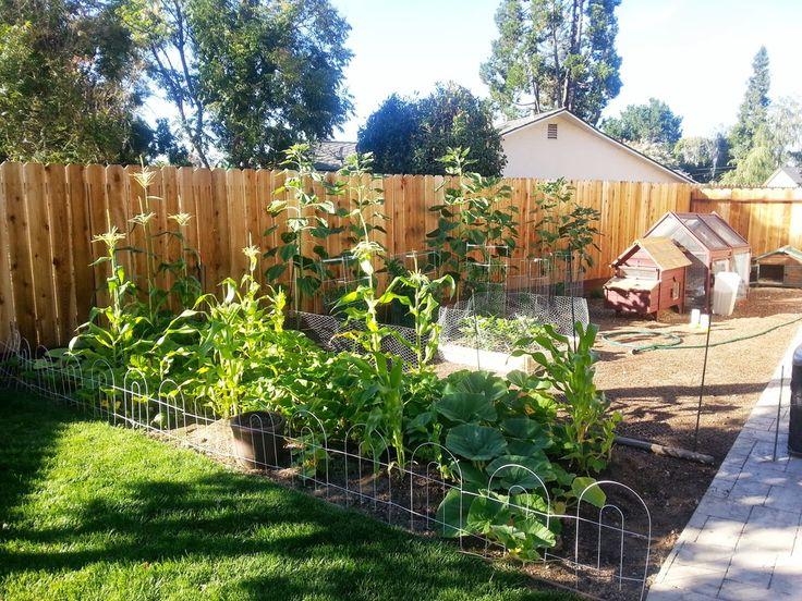 Suburban Backyard Farming : suburban backyard farm  UPDATE (Sub)Urban Farming ? Heather Green