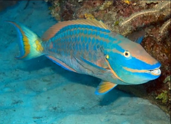Pin by jeff sterling on nature and related pinterest for Brackish water fish