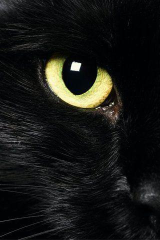 """Lil' Black Kitty"" - close up"