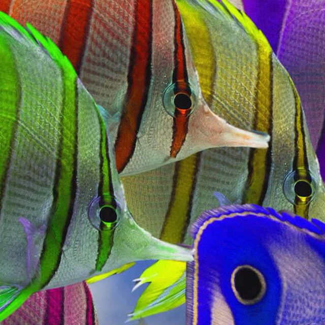 Colourful Fish Under The Sea Pinterest