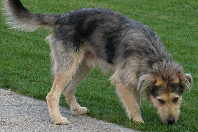 big scruffy dog breeds   Zoe Fans Blog   Cute Baby Animals   Pinterest