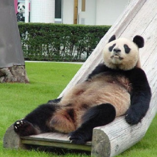 how to know if you have pandas