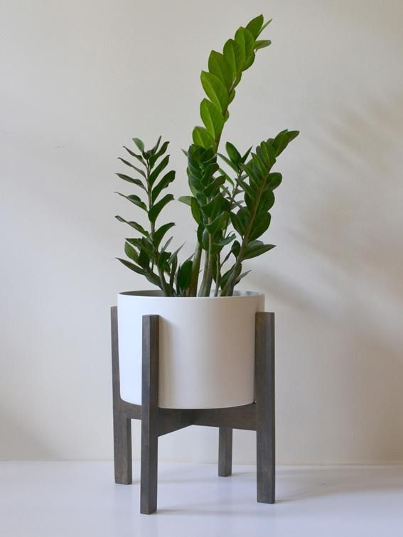 Zanzibar plant stand proud pot indoor gardening Plant stands for indoors