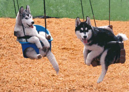 Huskies just kickin it