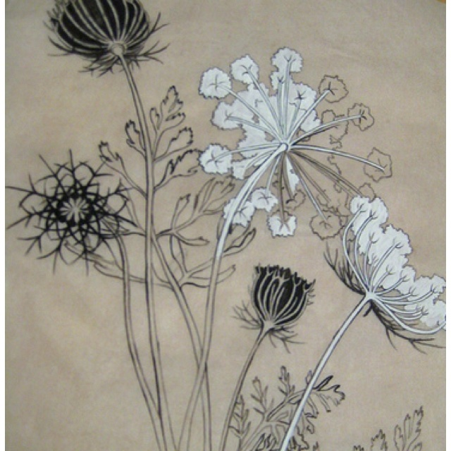 Queen Anne's lace ... Would make a lovely tattoo | tatty ...
