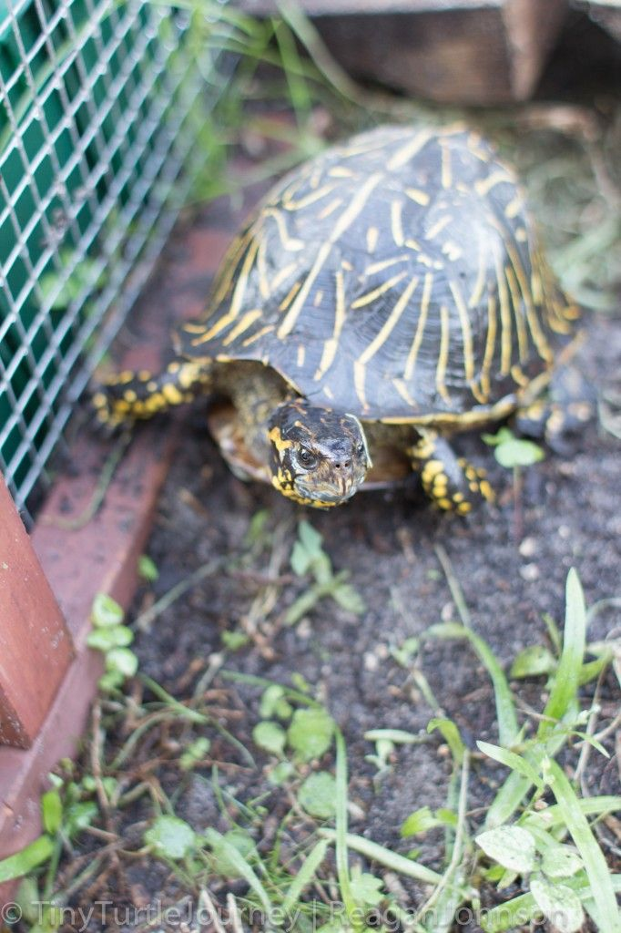 box turtle care The World.... Pinterest