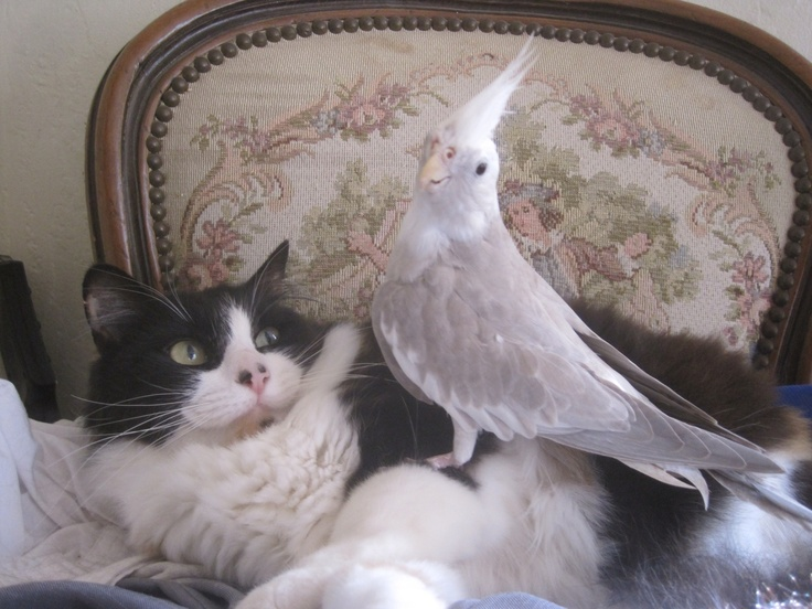 how to get a cat and bird to be friends