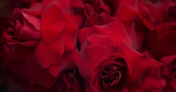 valentine s day 2010 online subtitrat