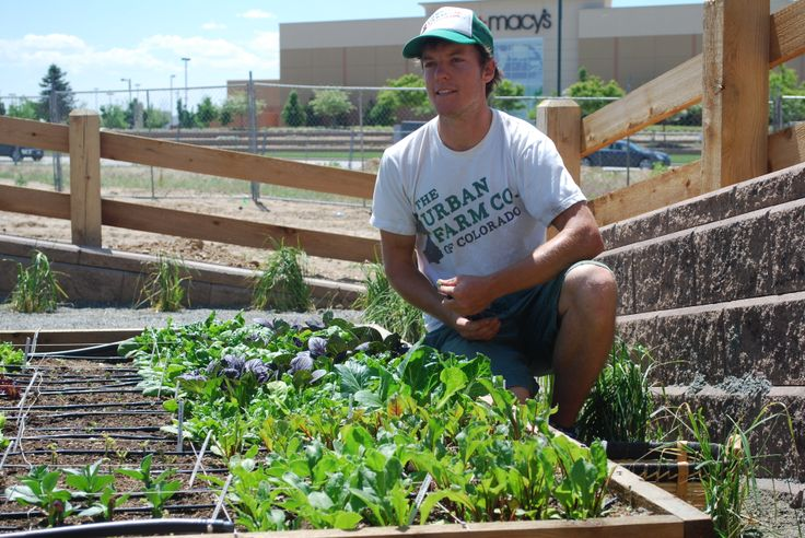 Backyard Urban Farm Company : Garden with The Urban Farm Company #lovestapleton #veggies #organic