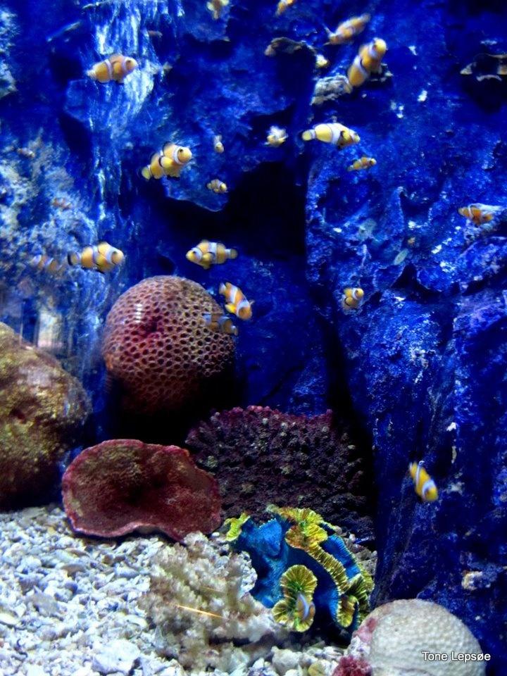 Rayong Aquarium. Thailand. TONE LEPS?ES PICTURES