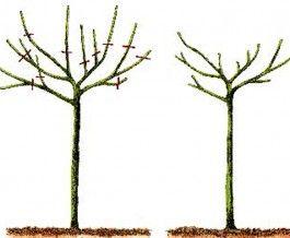 Poda de formacion rboles de sombra trabajos en el for Arboles de jardin para sombra