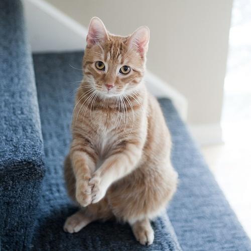 sorry. .. | Cat...