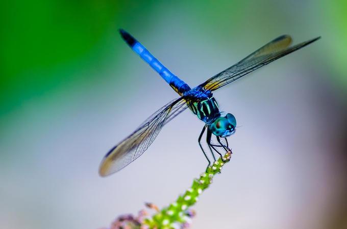 flying blue dragon by blue dragon flying blue image flying blue dragon ...