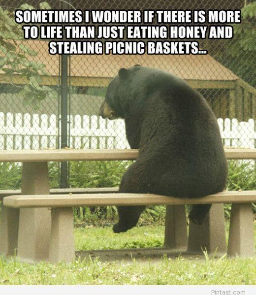 Funny bear quote 2014 Humor Pinterest