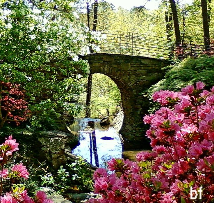 Pin By Earlene Hash On Garvan Gardens Hot Springs Ark Pinterest