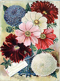 100s of vintage seed pack images!