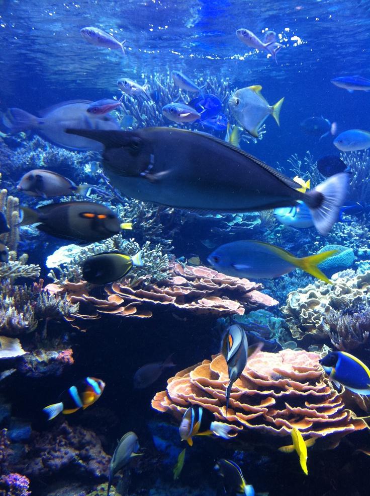 Riverhead aquarium discount coupons