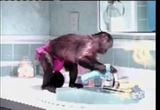 Bathroom monkey snl