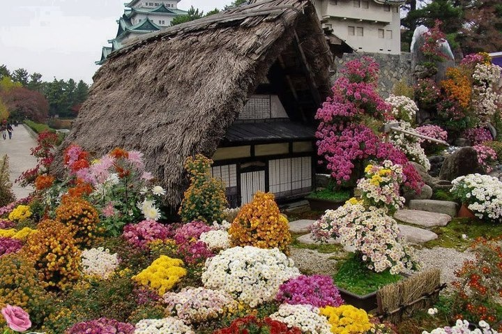cottage flowers evansville in