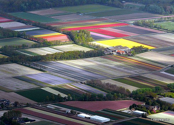 Holland's tulip fields from above