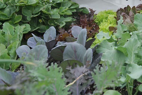 basement greenhouse a labor of love for cheap winter veggies