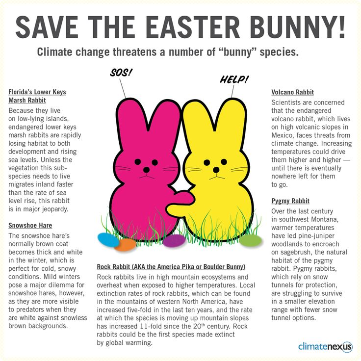 "Save the Easter Bunny!  Climate change threatens a number of ""bunny"" species!"
