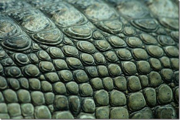 #crocodile skin