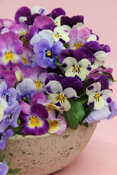 Potted Pansies - Pretty little happy faces. Ralph's favorite flower.