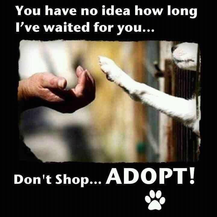 Instead of purchasing a dog from a breeder, adopt a dog. They need you so much, please help those that just want to be loved by someone.