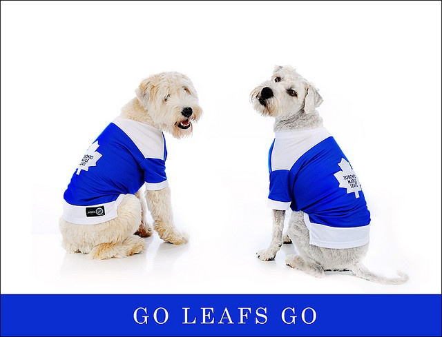 Go Leafs Go