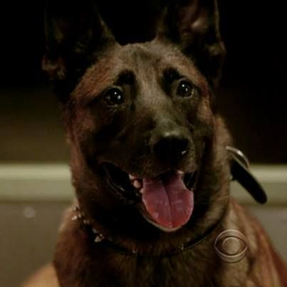 Bear from Person of Interest | POI | Pinterest